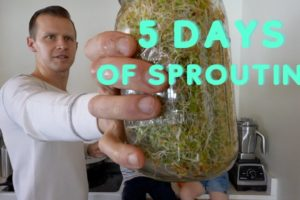 5 Days of Sprouting